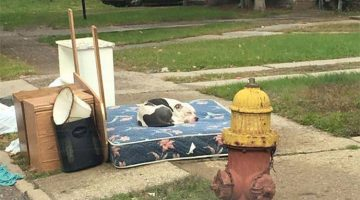 Owners Moved And Abandoned Their Dog With The Trash. Here's The Dog Now