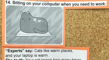 Vet Puts Hilarious Explanations Of 15 Common Cat Behaviors On His Cork Board