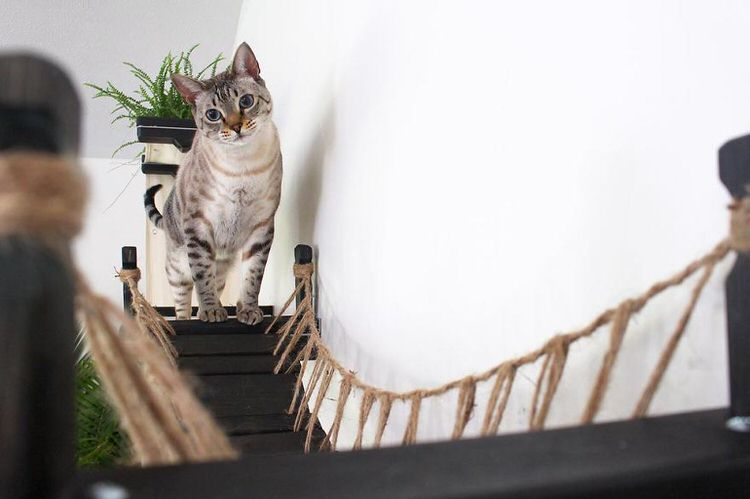 indiana jones cat bridge