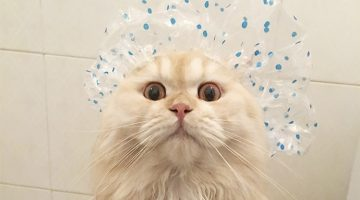 This Kitty Loves Taking Showers, And His Pictures Are Just Adorable