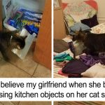 Boyfriend Didn't Believe His Girlfriend Who Blamed The Cat For Stealing Kitchen Objects, So She Caught Everything On Camera