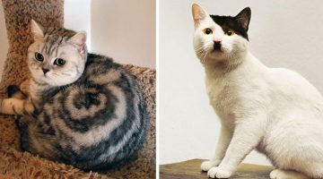 18 Cats With The Most Unique Fur Markings Ever