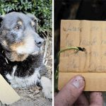 Family Had No Clue What Their Dog Was Up To – Then They Discovered A Note On His Collar