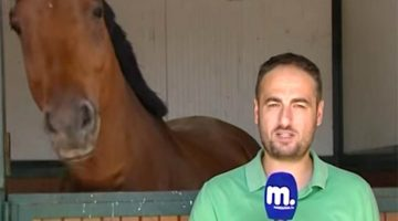 Reporter Stands In Front Of The Camera, The Horse Has The Staff In Laughter