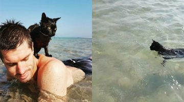 Rescue Cat Visits The Beach For The First Time And Finds Out She Loves Swimming