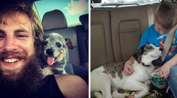 13 People Meeting Their Dogs For The First Time