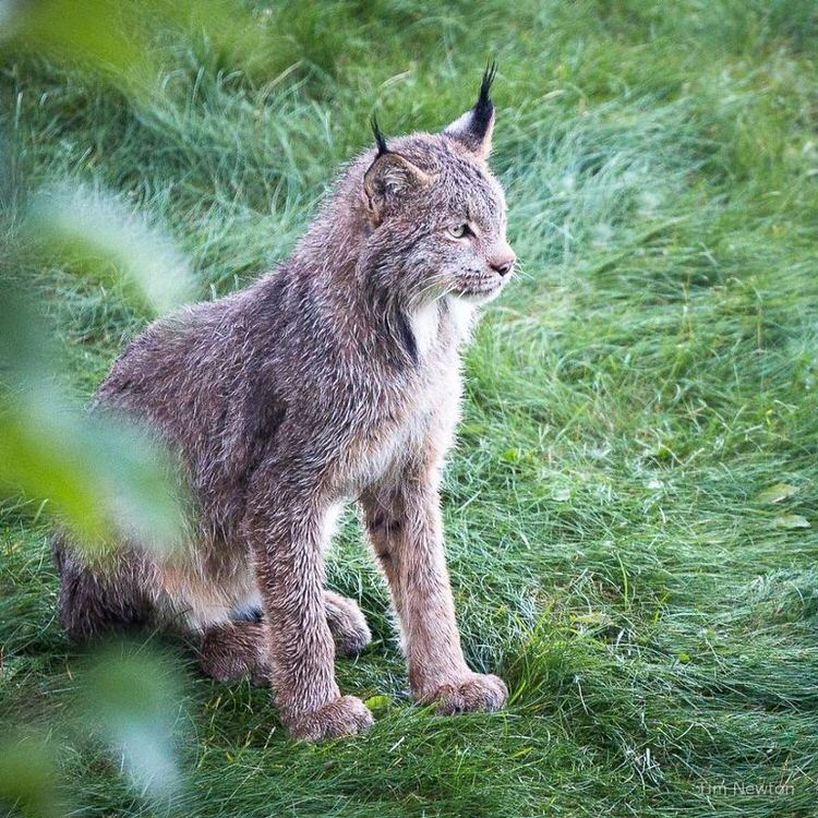 photographers-finds-lynx-porch