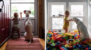 Dog Who Was Abused Is So Afraid Of Everything Except This Baby