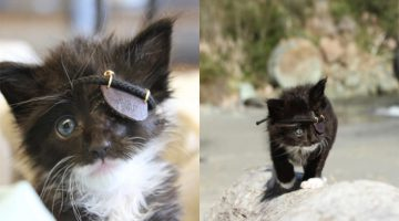 Rescue Kitten That Lost His Eye Gets The Cutest Eye Patch