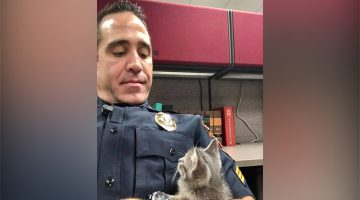 Stray Kitten Chooses Cop That Comforts Her As Her New Dad