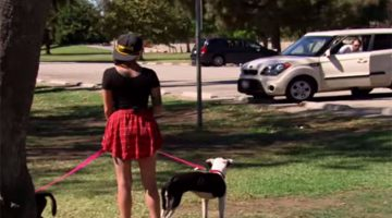 Woman Takes Two Heartbroken Dogs To The Park. It all Changes When They Find Out Who's Coming Out Of The Car