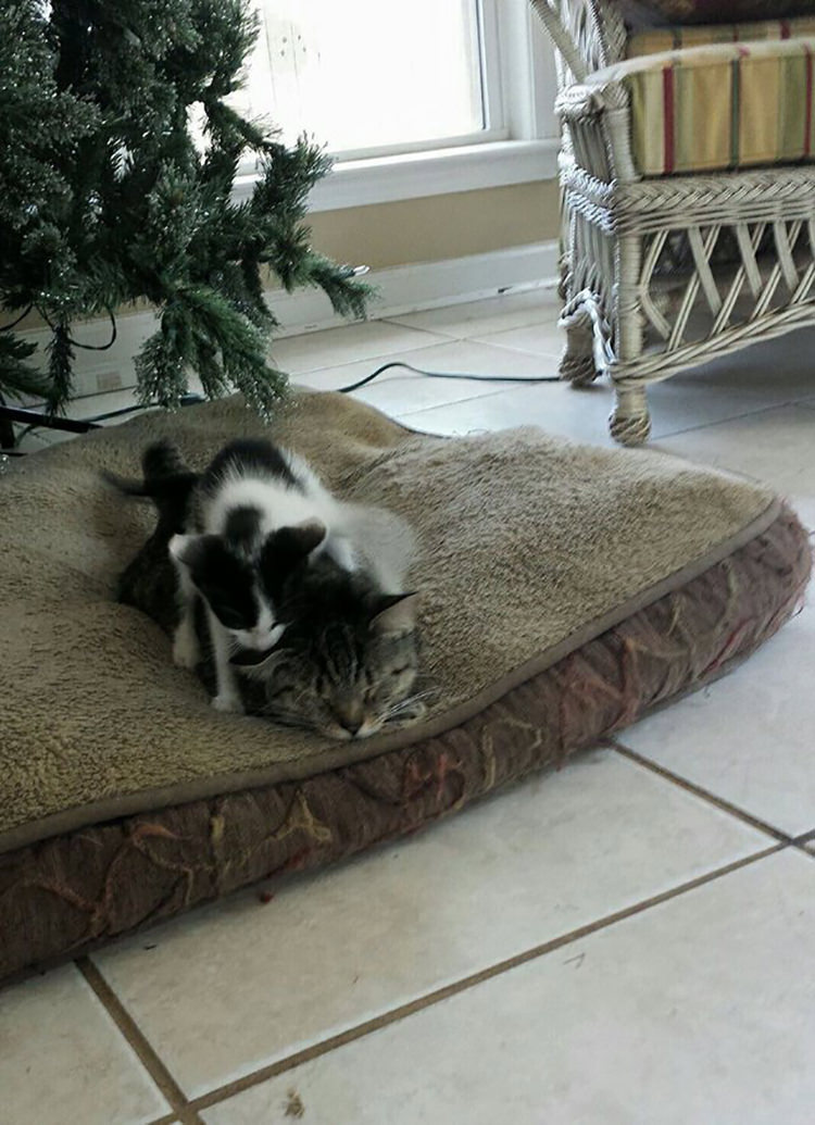 cat-comes-home-with-kitten