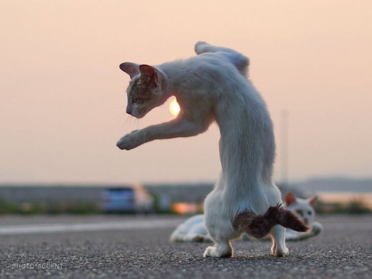 Japanese Photographer Captures Cats Best Kung Fu Moves 15