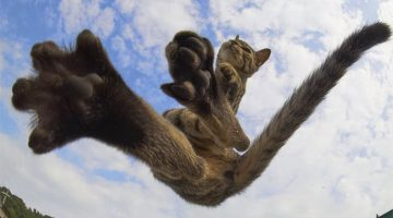 Japanese Photographer Captures Cats Best Kung-Fu Moves (15 Photos)