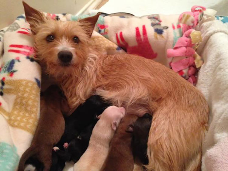 dog-momma-adopts-orphaned-puppies