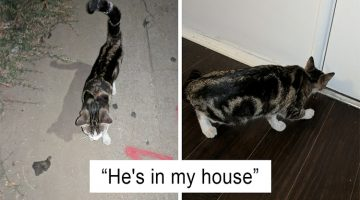 Guy Made Friends With A Stray Cat And The Cutest Story Developed From There