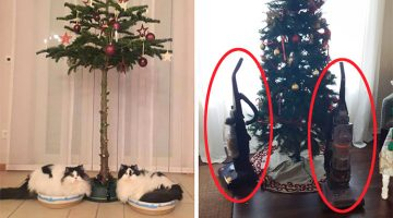 15 Incredible Ways People Protected Christmas Decorations From Their Pets