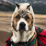 Cat And Dog Go On Epic Adventures, And Their Photos Are Absolutely Amazing