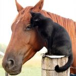 Adopted Cat Who Grew Up In A Shelter Makes His Very First Friend – A Horse