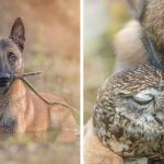 19 Amazing Pictures Of Ingo The Dog And His Owl Friends That Will Melt Your Heart