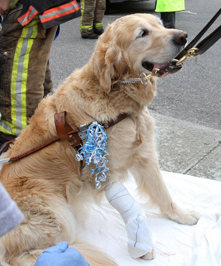 hero-dogs-pictures