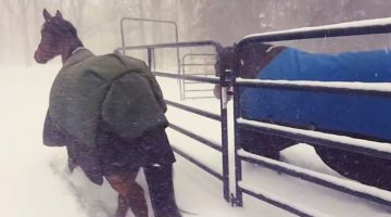 Man Let His Horses Out In The Snow, Their Reaction Has Internet Laughing Out Loud