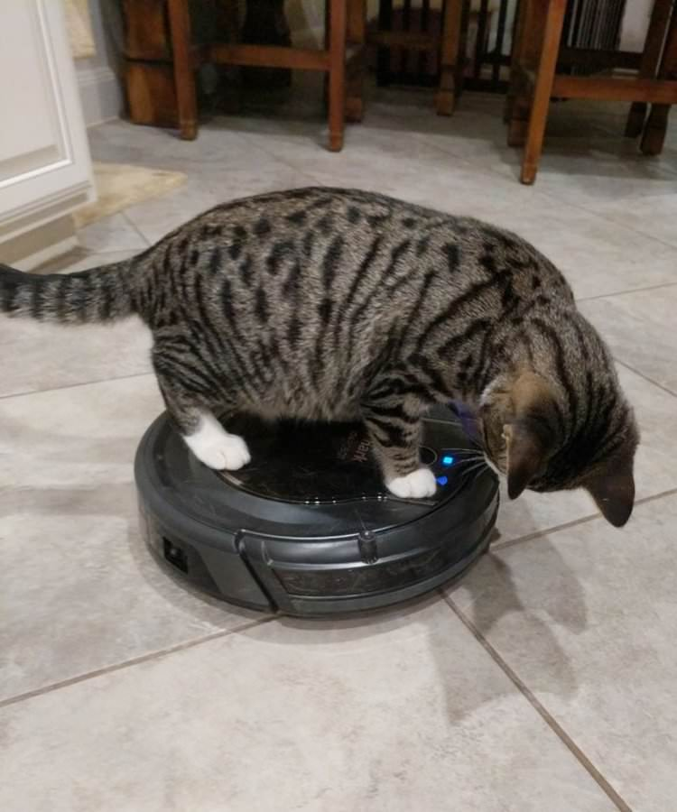 rescue-kitten-obsessed-with-roomba