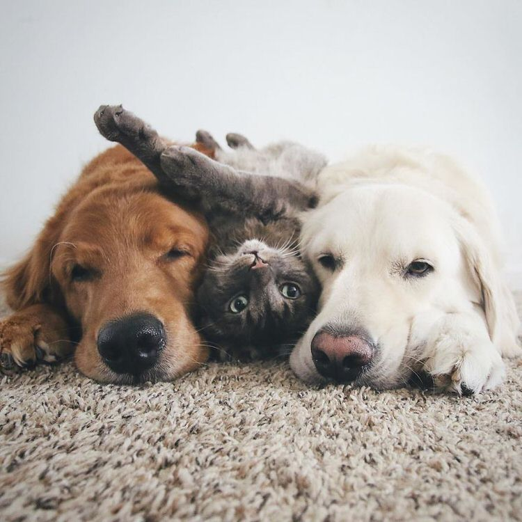 These Two Dogs And A Cat Are Best Friends And Love Doing