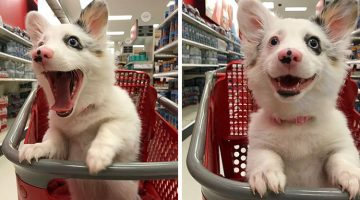 Dog Goes On A Shopping Trip And Has The Best Time Of Her Life