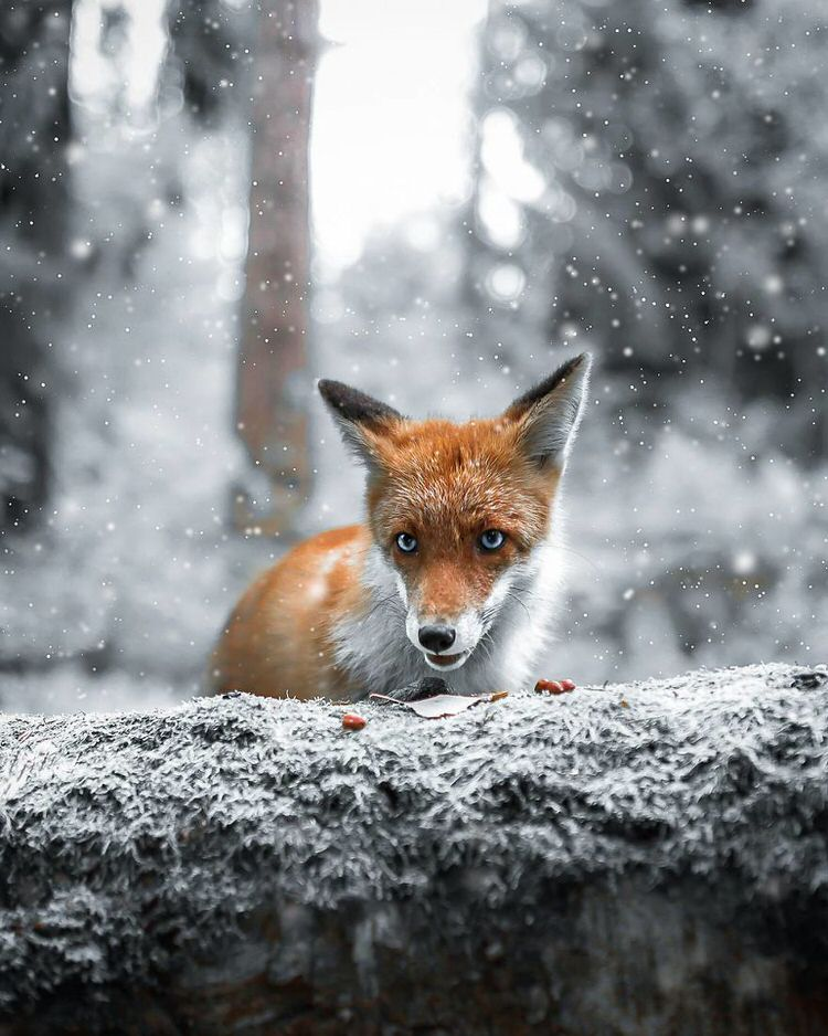 Finnish Photographer Shoots Forest Animals Like They're