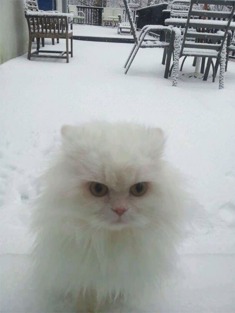 funny-animals-first-snow