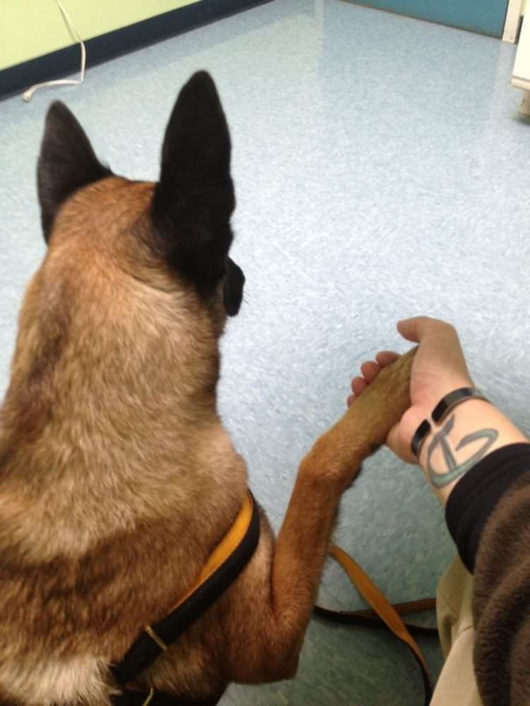 funny-dogs-found-out-going-to-the-vet