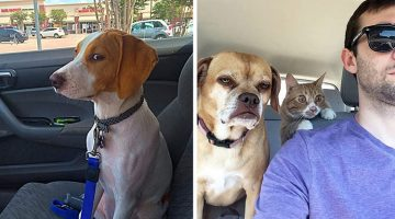 19 Funny Times Dogs Found Out They Were Heading To The Vet And Not The Park